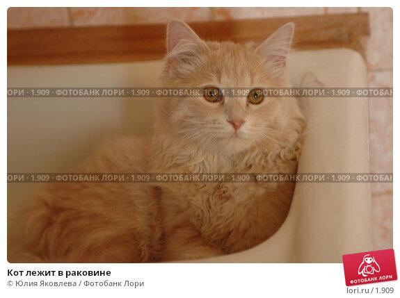 Кот лежит в раковине, фото № 1909, снято 22 марта 2006 г. (c) Юлия Яковлева / Фотобанк Лори
