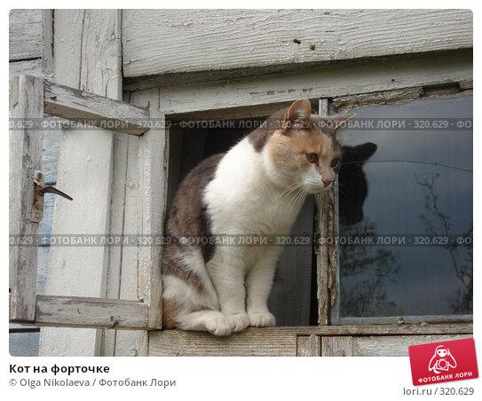 Кот на форточке, фото № 320629, снято 10 мая 2008 г. (c) Olga Nikolaeva / Фотобанк Лори