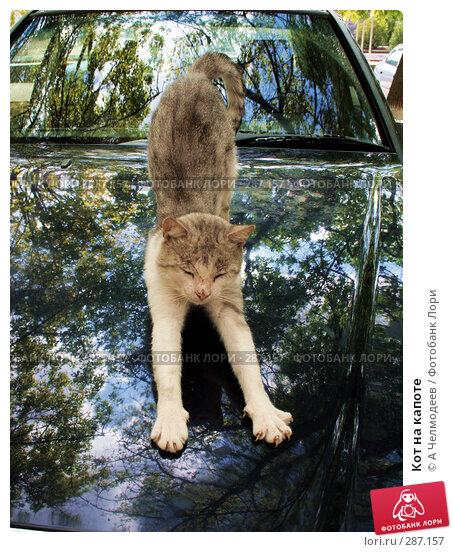 Кот на капоте, фото № 287157, снято 1 сентября 2007 г. (c) A Челмодеев / Фотобанк Лори