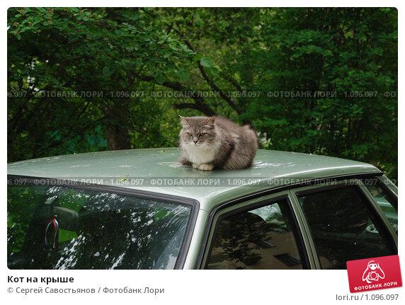 Кот на крыше. Стоковое фото, фотограф Сергей Савостьянов / Фотобанк Лори