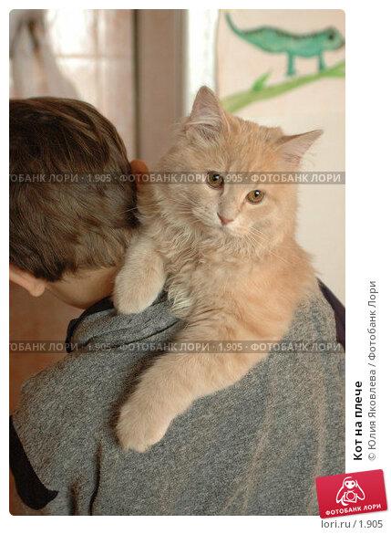 Купить «Кот на плече», фото № 1905, снято 22 марта 2006 г. (c) Юлия Яковлева / Фотобанк Лори
