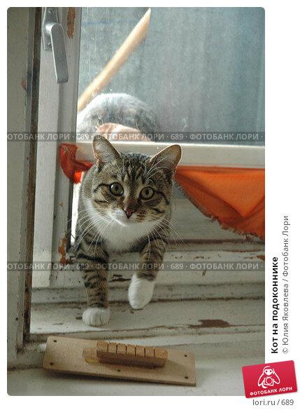 Купить «Кот на подоконнике», фото № 689, снято 20 мая 2005 г. (c) Юлия Яковлева / Фотобанк Лори