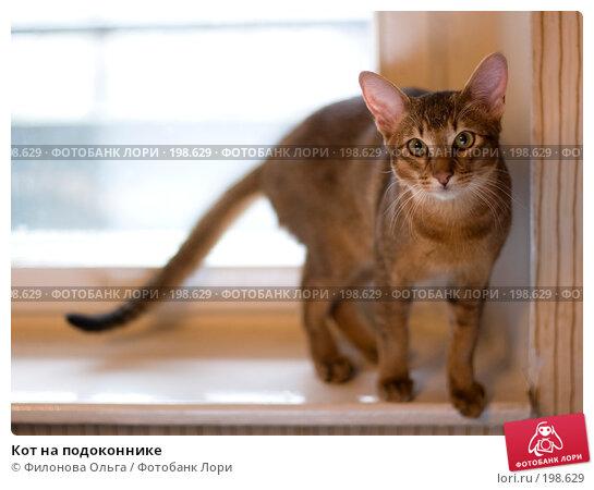 Купить «Кот на подоконнике», фото № 198629, снято 7 февраля 2008 г. (c) Филонова Ольга / Фотобанк Лори