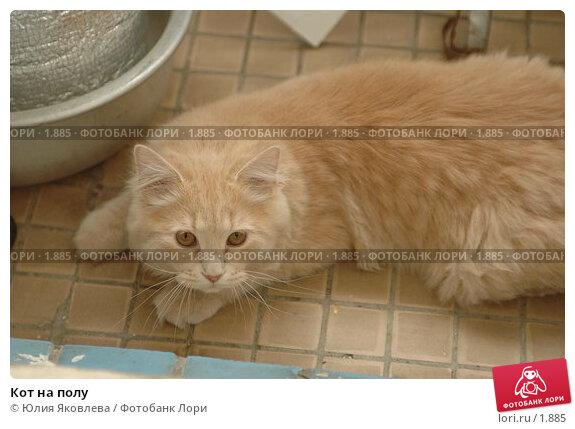 Кот на полу, фото № 1885, снято 22 марта 2006 г. (c) Юлия Яковлева / Фотобанк Лори