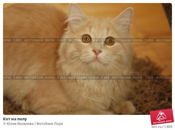 Кот на полу, фото № 1893, снято 22 марта 2006 г. (c) Юлия Яковлева / Фотобанк Лори