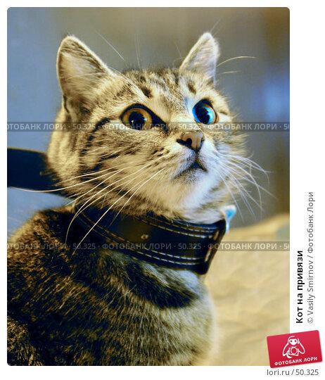 Кот на привязи, фото № 50325, снято 8 марта 2003 г. (c) Vasily Smirnov / Фотобанк Лори
