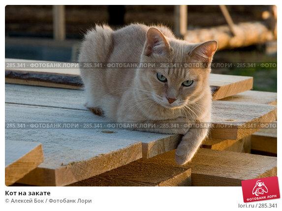 Кот на закате, эксклюзивное фото № 285341, снято 27 мая 2007 г. (c) Алексей Бок / Фотобанк Лори