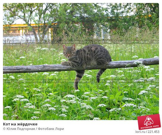 Кот на жёрдочке, фото № 221453, снято 30 июня 2005 г. (c) Юлия Селезнева / Фотобанк Лори