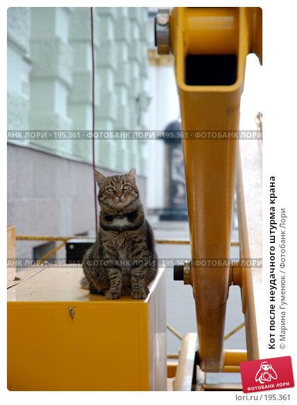 Кот после неудачного штурма крана, фото № 195361, снято 23 июня 2007 г. (c) Марина Гуменюк / Фотобанк Лори