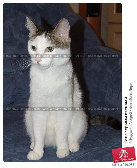 Кот с серыми пятнами, фото № 19033, снято 6 января 2007 г. (c) Нурулин Андрей / Фотобанк Лори