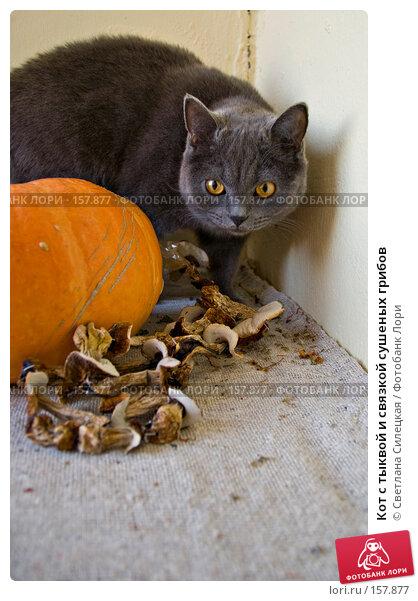Кот с тыквой и связкой сушеных грибов, фото № 157877, снято 24 декабря 2007 г. (c) Светлана Силецкая / Фотобанк Лори