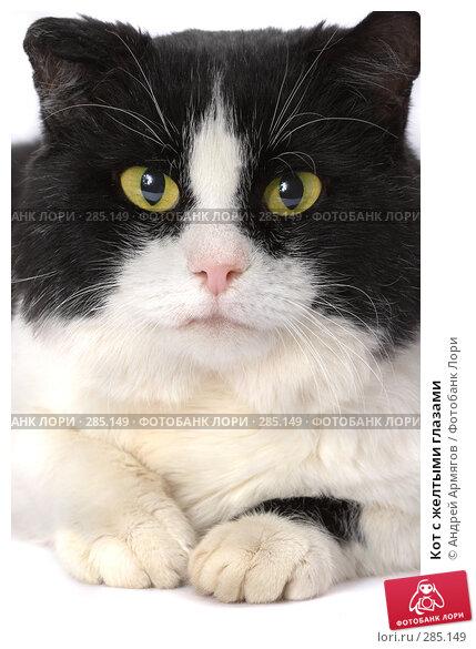 Кот с желтыми глазами, фото № 285149, снято 1 декабря 2006 г. (c) Андрей Армягов / Фотобанк Лори