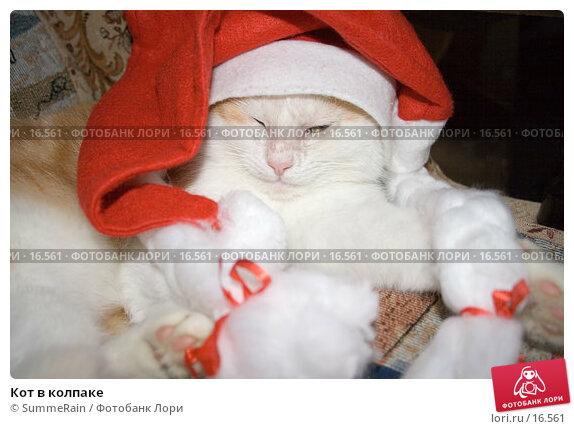 Кот в колпаке, фото № 16561, снято 28 июля 2017 г. (c) SummeRain / Фотобанк Лори