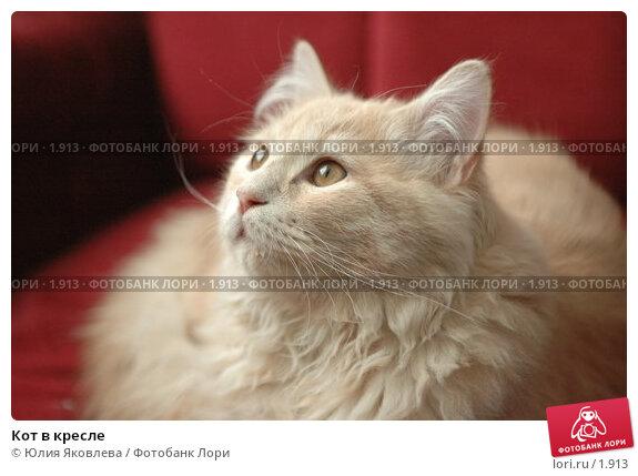 Купить «Кот в кресле», фото № 1913, снято 22 марта 2006 г. (c) Юлия Яковлева / Фотобанк Лори
