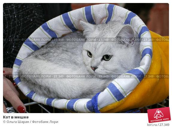 Кот в мешке, фото № 27349, снято 15 апреля 2006 г. (c) Ольга Шаран / Фотобанк Лори