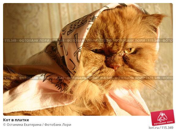 Кот в платке, фото № 115349, снято 19 августа 2005 г. (c) Останина Екатерина / Фотобанк Лори