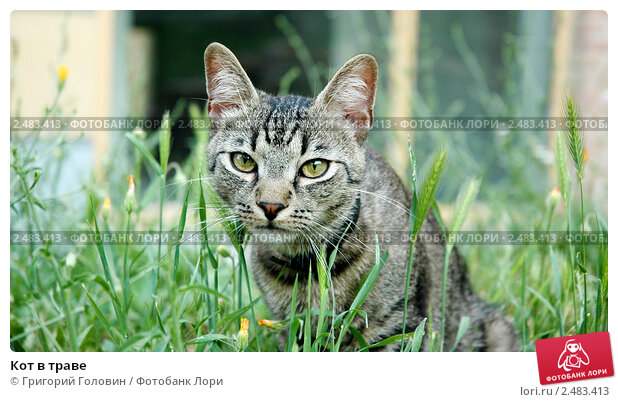 Кот в траве. Стоковое фото, фотограф Григорий Головин / Фотобанк Лори