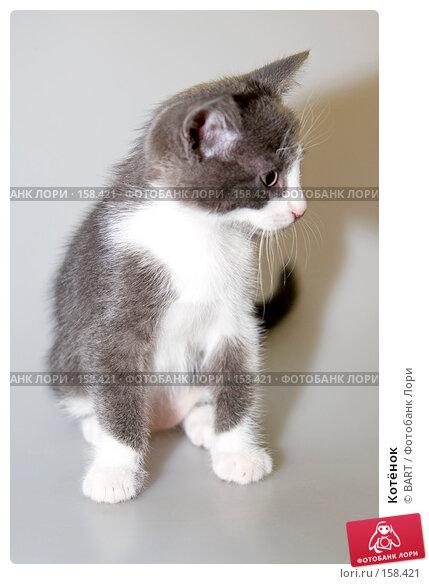 Котёнок, фото № 158421, снято 4 июня 2007 г. (c) BART / Фотобанк Лори