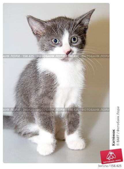 Котёнок, фото № 158425, снято 4 июня 2007 г. (c) BART / Фотобанк Лори