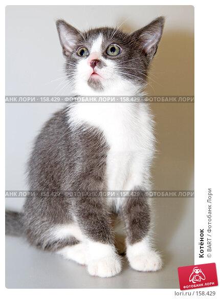Котёнок, фото № 158429, снято 4 июня 2007 г. (c) BART / Фотобанк Лори