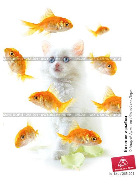 Котенок и рыбки, фото № 285201, снято 28 апреля 2007 г. (c) Андрей Армягов / Фотобанк Лори