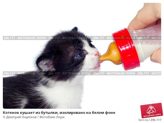 Котенок кушает из бутылки, изолировано на белом фоне, фото № 296117, снято 23 ноября 2007 г. (c) Дмитрий Ощепков / Фотобанк Лори