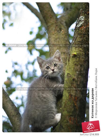 Котенок на дереве, фото № 214909, снято 31 августа 2004 г. (c) Морозова Татьяна / Фотобанк Лори