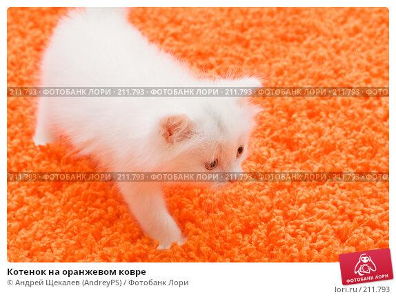 Котенок на оранжевом ковре, фото № 211793, снято 25 февраля 2008 г. (c) Андрей Щекалев (AndreyPS) / Фотобанк Лори