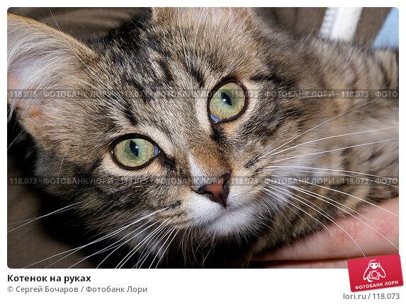 Котенок на руках, фото № 118073, снято 22 сентября 2007 г. (c) Сергей Бочаров / Фотобанк Лори