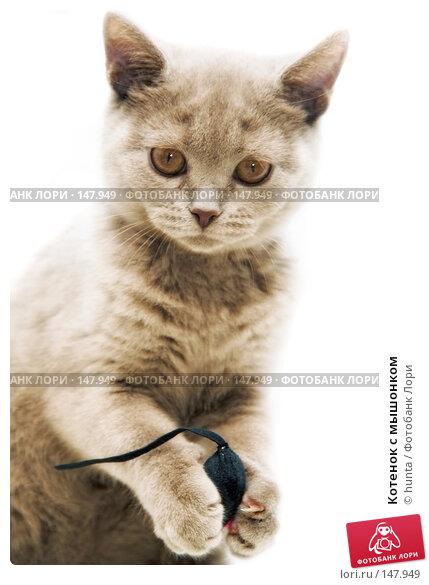 Котенок с мышонком, фото № 147949, снято 21 марта 2007 г. (c) hunta / Фотобанк Лори
