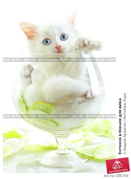 Котенок в бокале для вина, фото № 285193, снято 28 апреля 2007 г. (c) Андрей Армягов / Фотобанк Лори