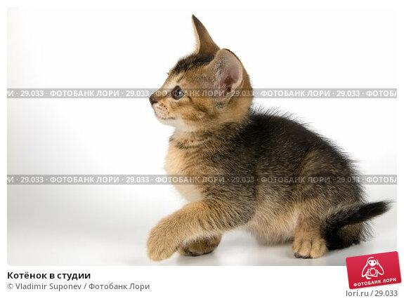 Котёнок в студии, фото № 29033, снято 31 марта 2007 г. (c) Vladimir Suponev / Фотобанк Лори