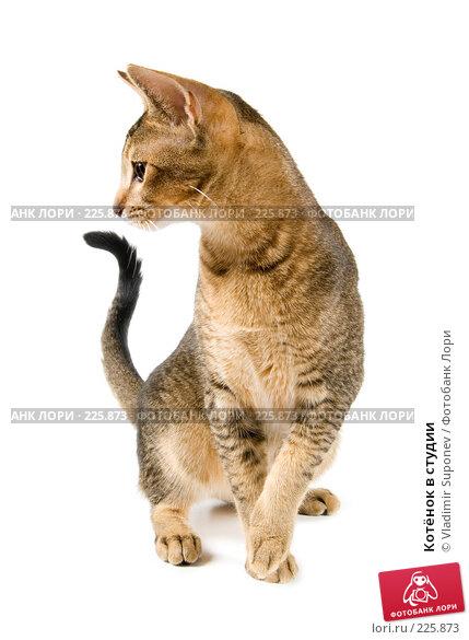 Котёнок в студии, фото № 225873, снято 21 октября 2007 г. (c) Vladimir Suponev / Фотобанк Лори