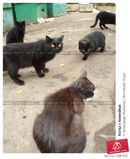 Коты с помойки, фото № 338373, снято 29 сентября 2007 г. (c) Александр Новиков / Фотобанк Лори