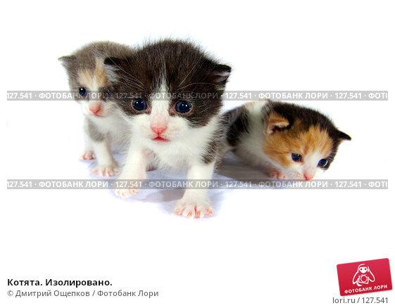 Купить «Котята. Изолировано.», фото № 127541, снято 17 ноября 2007 г. (c) Дмитрий Ощепков / Фотобанк Лори