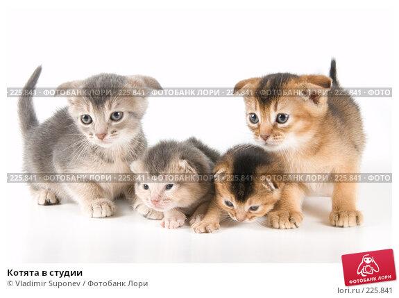 Котята в студии, фото № 225841, снято 11 декабря 2007 г. (c) Vladimir Suponev / Фотобанк Лори