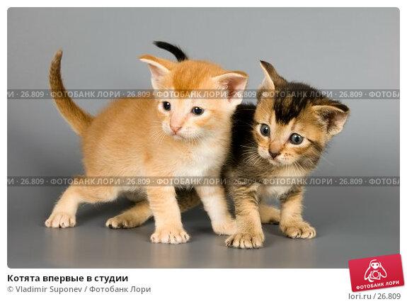 Котята впервые в студии, фото № 26809, снято 10 марта 2007 г. (c) Vladimir Suponev / Фотобанк Лори
