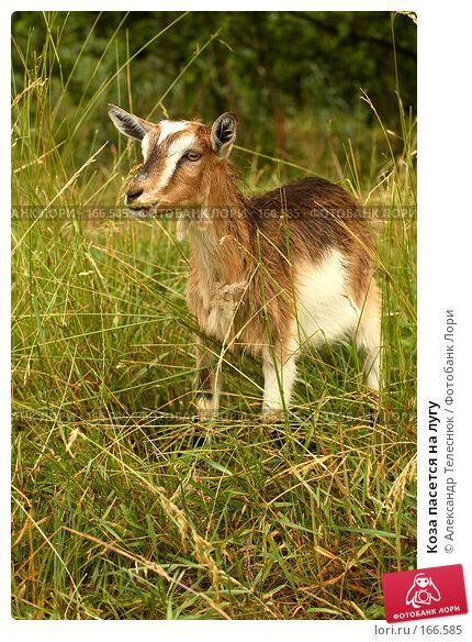 Купить «Коза пасется на лугу», фото № 166585, снято 23 июня 2007 г. (c) Александр Телеснюк / Фотобанк Лори