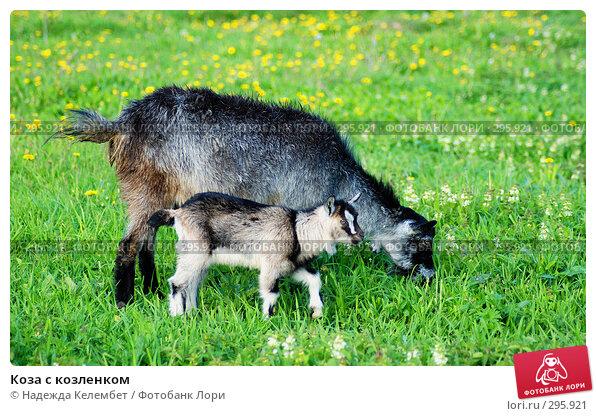 Коза с козленком, фото № 295921, снято 18 мая 2008 г. (c) Надежда Келембет / Фотобанк Лори