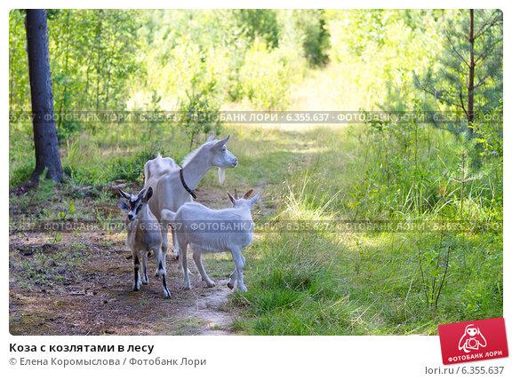 Купить «Коза с козлятами в лесу», эксклюзивное фото № 6355637, снято 25 июля 2014 г. (c) Елена Коромыслова / Фотобанк Лори