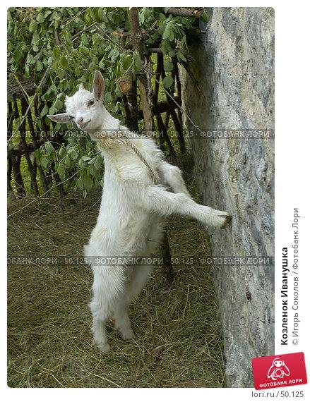 Купить «Козленок Иванушка», фото № 50125, снято 24 апреля 2018 г. (c) Игорь Соколов / Фотобанк Лори