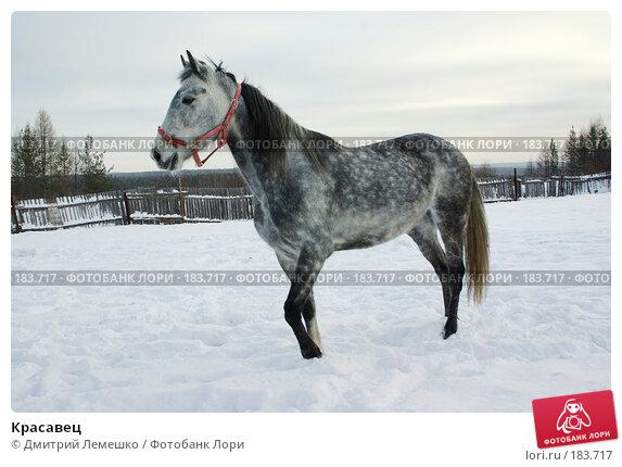 Купить «Красавец», фото № 183717, снято 19 января 2008 г. (c) Дмитрий Лемешко / Фотобанк Лори