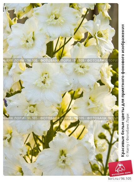 Красивые белые цветы для приятного фонового изображения, фото № 96105, снято 7 июля 2007 г. (c) Harry / Фотобанк Лори