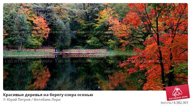 Красивые деревья на берегу озера осенью. Стоковое фото, фотограф Юрий Петров / Фотобанк Лори