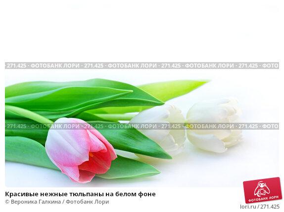 Красивые нежные тюльпаны на белом фоне, фото № 271425, снято 1 марта 2008 г. (c) Вероника Галкина / Фотобанк Лори