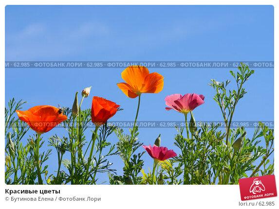 Купить «Красивые цветы», фото № 62985, снято 17 июля 2007 г. (c) Бутинова Елена / Фотобанк Лори