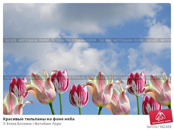 Купить «Красивые тюльпаны на фоне неба», фото № 162633, снято 26 июня 2007 г. (c) Елена Блохина / Фотобанк Лори