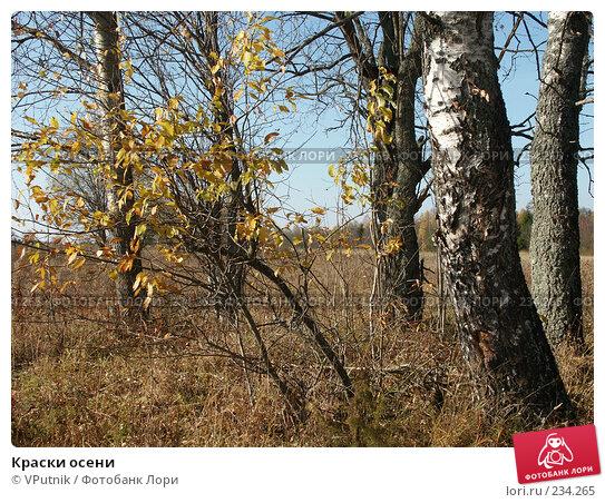 Купить «Краски осени», фото № 234265, снято 10 октября 2005 г. (c) VPutnik / Фотобанк Лори