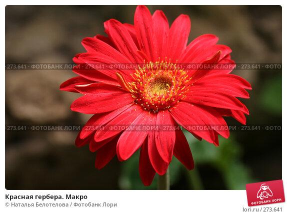 Красная гербера. Макро, фото № 273641, снято 3 мая 2008 г. (c) Наталья Белотелова / Фотобанк Лори