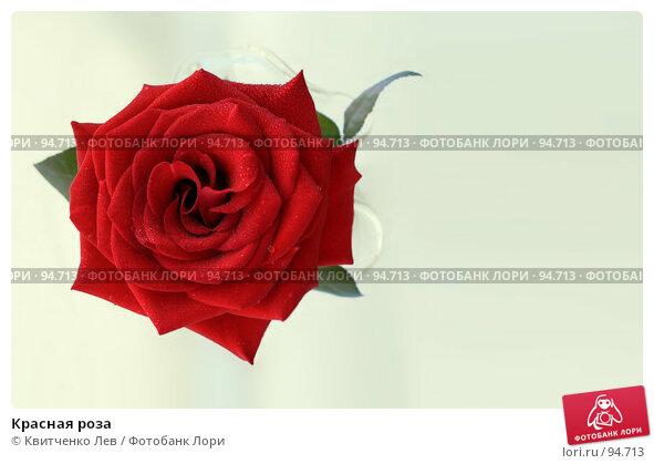 Красная роза, фото № 94713, снято 24 июня 2007 г. (c) Квитченко Лев / Фотобанк Лори
